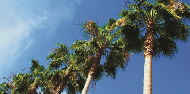 Palm Springs Tours