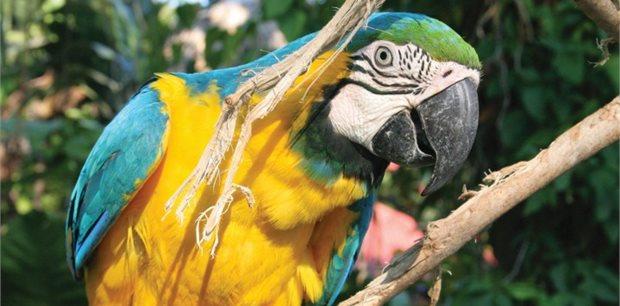 Intrepid | Central American Adventure