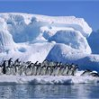 Adventure World Travel   Highlights of the Frozen Continent