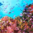 Dive Papua New Guinea   Dive Walindi Package   Papua New Guinea