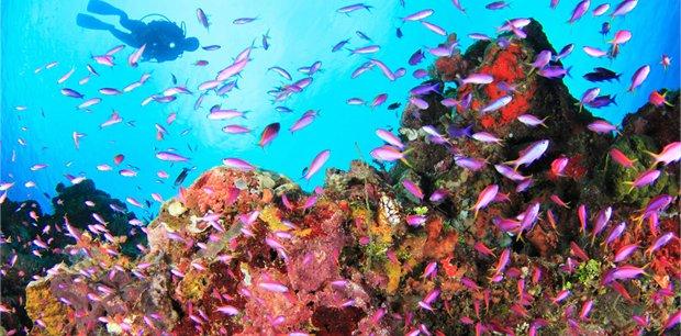 travel&co. | Dive Walindi, Papua New Guinea