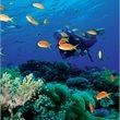 Fiji | 2 Tank Dive