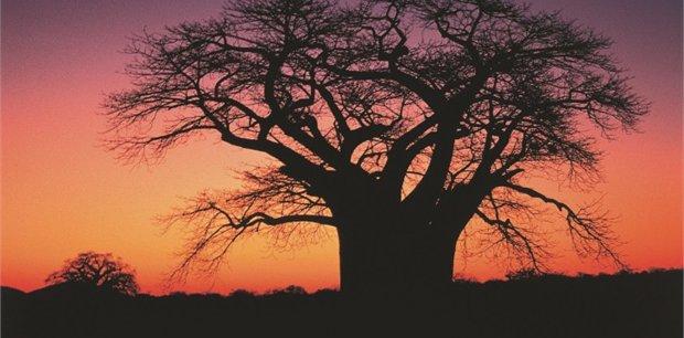 Globus - Africa Tours