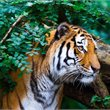 Adventure World Travel | Central India Wildlife