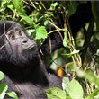 Adventure World Travel | Glimpse of Gorillas & Chimps