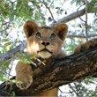 Adventure World Travel | Handpicked Uganda