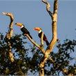 World Journeys | Wildlife of the Pantanal
