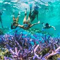 Pacific Island Hopper - Cruise Expo