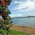 Grandeur Of New Zealand - Luxury Cruise Sale