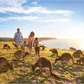 Kangaroo Island - Oh Buoy Sale