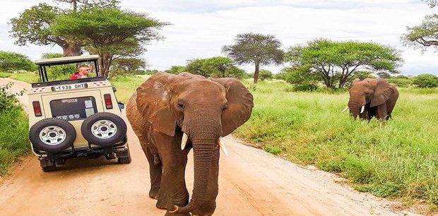 Contiki   East Africa Safari