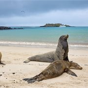 Intrepid | Galapagos Adventure: Northern Islands (Grand Daphne)