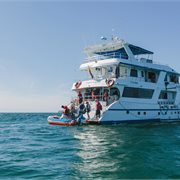 Intrepid | Galapagos Adventure: Northern Islands (Daphne)