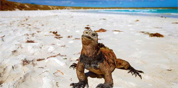 Intrepid | Ultimate Galapagos: Central Islands (Daphne)