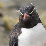 Intrepid | Antarctic Peninsula, Falkland Islands & South Georgia: From Buenos Aires