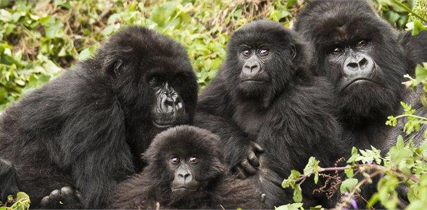 Intrepid | Remarkable Rwanda & Gorillas of Uganda