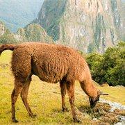 Intrepid | Six Days on the Inca Trail