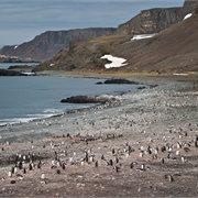 Intrepid | Antarctic Peninsula, Falkland Islands & South Georgia from Ushuaia