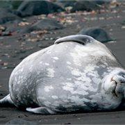 Intrepid | Antarctic Peninsula, Falkland Islands & South Georgia