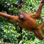 Intrepid | Borneo Family Holiday
