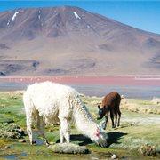 Intrepid | Bolivia Highlights