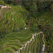 Intrepid | Essential Bali & Gili Islands