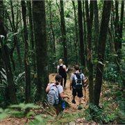 Intrepid | Sabah Adventure
