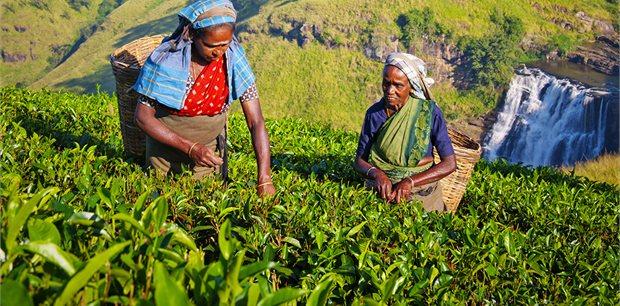 Intrepid | Best of Sri Lanka
