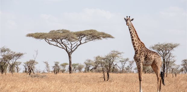 Intrepid | East Africa Highlights