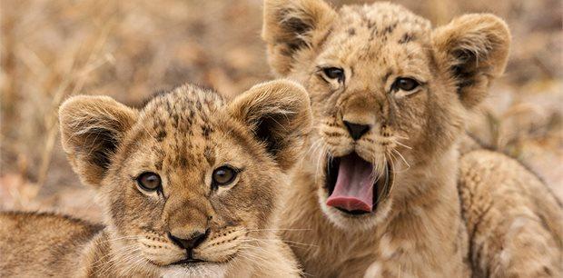 Intrepid | Kruger Lodge Experience