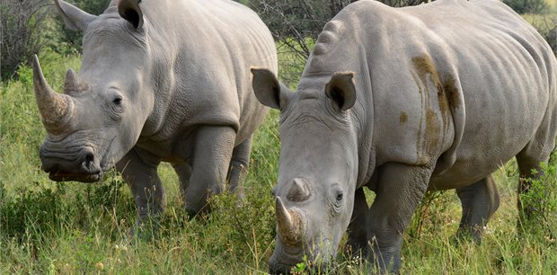 Intrepid | Okavango Experience