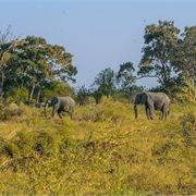 Intrepid | Okavango & Beyond