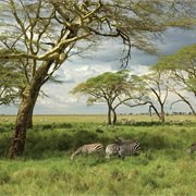 Intrepid | Serengeti Trail