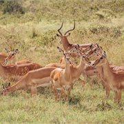 Intrepid | Kenya Wildlife Safari