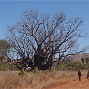 Intrepid | Broome to the Bungle Bungles