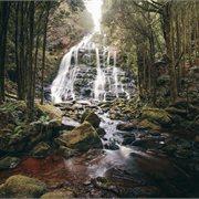 Intrepid | Discover Tasmania