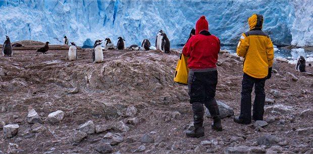 Peregrine | Christmas in Antarctica