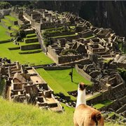 Peregrine | Machu Picchu Experience – Independent