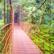 Peregrine | Costa Rica Highlights