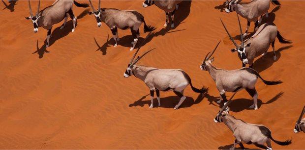Peregrine | Classic Namibia