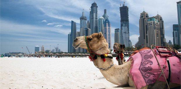 Peregrine | Dubai Experience: Independent