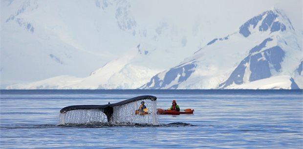 Peregrine | WWF Giants of Antarctica