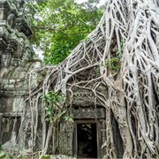 Geckos | The Real Cambodia